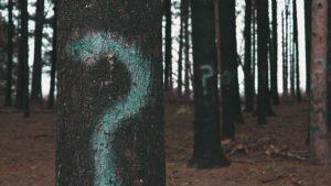 Teaser: Forstliche Förderung