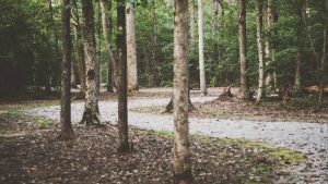 Teaser: Forsteinrichtung